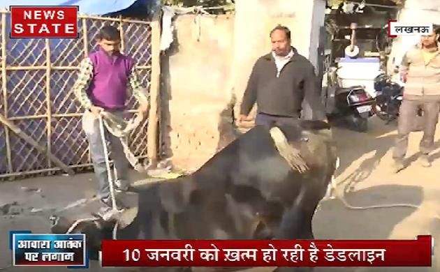 Lucknow: CM योगी आदित्यनाथ के आदेश पर निगम की कार्यवाई, आवारा पशुओं पर पकड़ तेज
