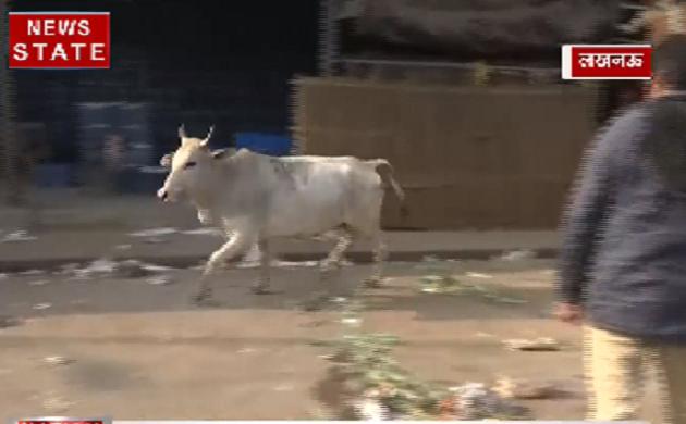 आवारा पशुओं पर CM योगी सख़्त, पकड़कर भेजे जा रहे हैं गौशाला