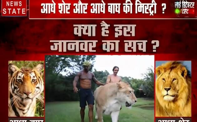 लाई डिटेक्टर टेस्ट : ना बाघ है ना शेर है... फिर ये क्या है ?