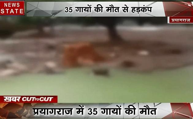 Khabar Cut2Cut: प्रयागराज में 35 गायों की मौत, प्रशासन कर रही है लीपापोती, देखिए देश-दुनिया की बड़ी खबरें