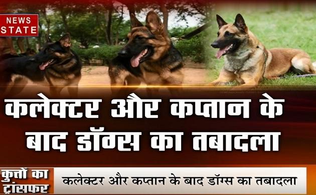 Madhya pradesh: कलेक्टर और कप्तान के बाद अब डॉग्स के तबादले, देखें वीडियो