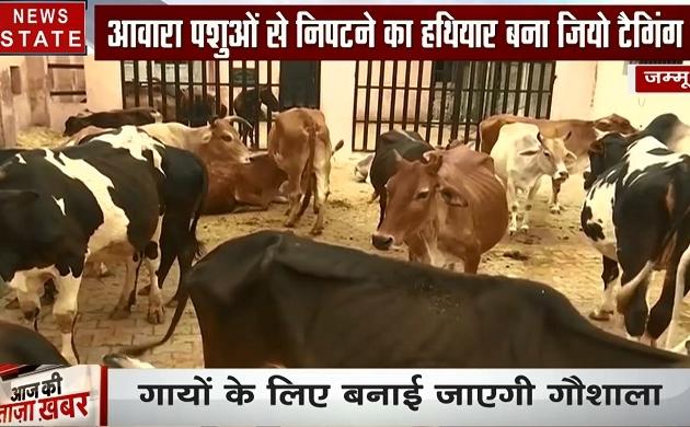Jammu Kashmir: आवारा पशुओं की समस्या से निपटने के लिए की जा रही है जियो टैगिंग, देखें वीडियो