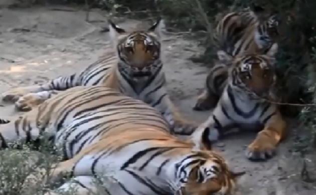 UP Speed News : PM Narendra Modi ने जारी किए देश में बाघों के आकड़ें,  देखिए देश-दुनिया की सभी छोटी-बड़ी खबरें