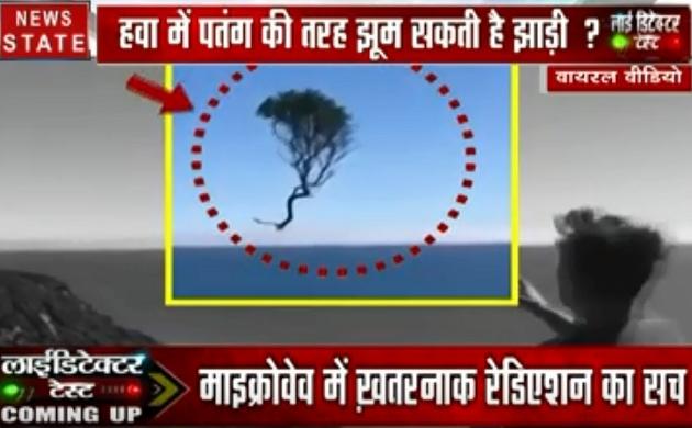 Lie Detector Test: क्या है हवा में उड़ती जादुई झाड़ियों का सच, देखें वायरल होते हुए वीडियो की हकीकत