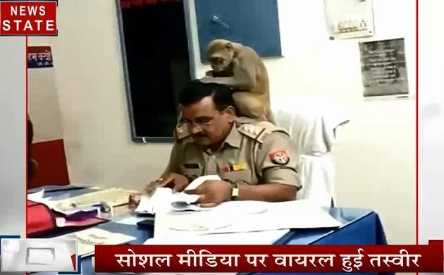Uttar pradesh: पीलीभीत- थाने में इंस्पेक्टर के सिर पर बैठा बंदर, देखें कैसे पतली हो गई स्टाफ की हालत