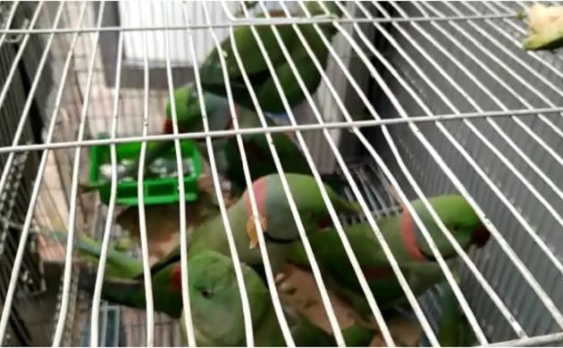 दिल्ली की पटियाला हाउस कोर्ट में जज के सामने पेश किए गए 13 तोते