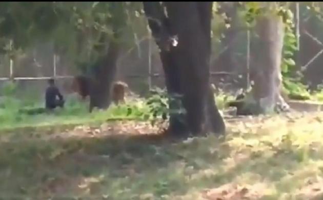 दिल्ली : एक बार फिर शेर के पिंजरे में गिरा युवक, जानिए फिर क्या हुआ