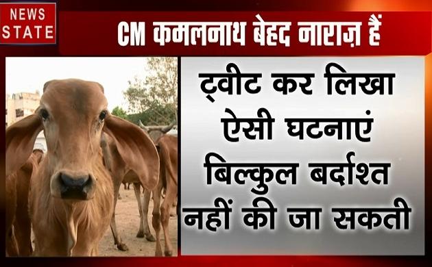 Madhya pradesh: डबरा में 17 गायों की मौत, सीएम कमलनाथ ने दिए जांच के आदेश