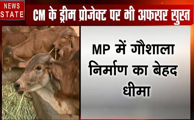 Madhya pradesh: MP में गौशाला का निर्माण बेहद धीमा, सीएम ने लगाई अधिकारियों को फटकार
