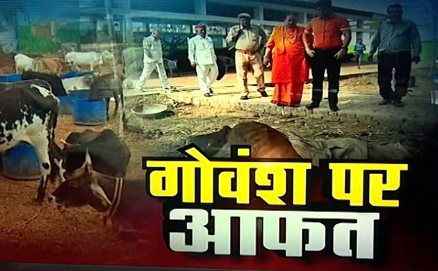 Uttar pradesh: गोवंश पर आफत, सीएम योगी के ड्रीम प्रोजेक्ट पर हुए सवाल खड़े