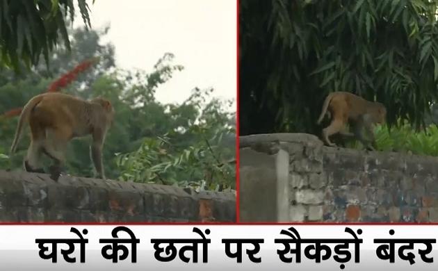 Narela: दिल्ली के नरेला इलाके में बंदरों का आतंक, बच्चों पर हमला करते बंदरों से लोग परेशान