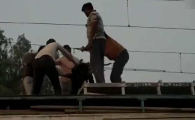 ANI FEED: मध्यप्रदेश के डबरा रेलवे स्टेशन पर ओवरडेड तारों से लटका युवक, रेलवे पुलिस ने पहले बचाया फिर की जमकर पिटाई