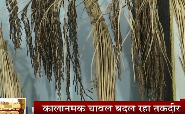 Haryana: पूर्वांचल में किसानों को मिल रहा काला नमक चावल से दोगुना फायदा, 11 जिलों को मिला GI टैग
