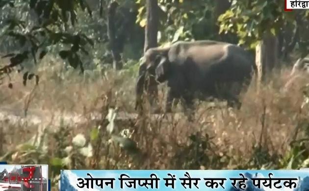 Uttarakhand: हरिद्वार में खुला राजाजी टाइगर रिजर्व, जंगल सफरी का लुफ्त उठाने पहुंचे देसी- विदेशी पर्यटक