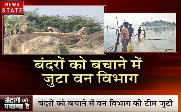 Chhattisgarh: सुनसान टापू पर फंसे 100 से ज्यादा बंदर