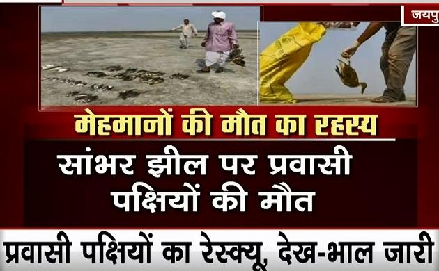 Rajasthan: सांभर झील के पास 23 हजार प्रवासी पक्षियों की मौत, इंसानों में बढ़ा इन्फेक्शन का खतरा