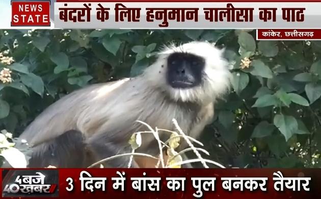 Chhattisgarh: सुनसान टापू पर फंसे 100 से ज्यादा बंदर, कुछ बंदरों का किया गया रेस्क्यू