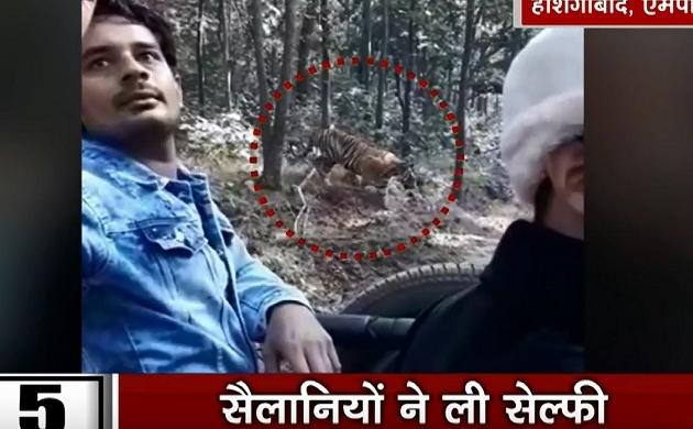 MP: ना जान की फिकर ना दहाड़ का खौफ, बाघ के साथ सैलानियों ने ली सेल्फी, देखें वायरल वीडियो
