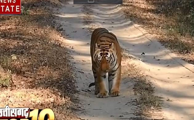 Chhattisgarh: वन विभाग प्रदेश में बाघों की गणना करेगा छत्तीसगढ़, संदिग्ध हालात में पूर्व NSUI नेता की मौत