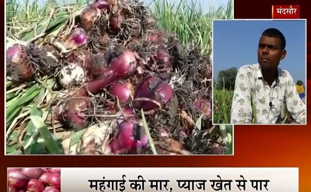 MP: मंदसौर में मंहगे प्याज का असर, किसान के खेत से प्याज की खड़ी फसल उखाड़ ले गए चोर