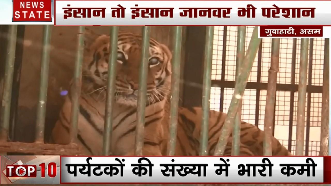 सर्दी के सितम से जानवर भी परेशान, गुवाहटी के जू में टाइगर- शेर के लिए हीटर, किंग कोबरा के लिए खास इंतजाम