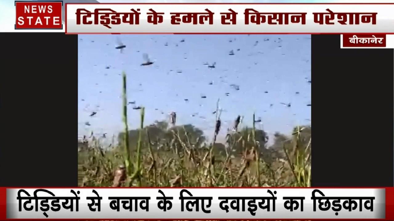 पाकिस्तान से सीमा पार आई आफत, टिड्डियों के हमले से फसल तबाह, किसानों को मुआवजा देगा प्रशासन
